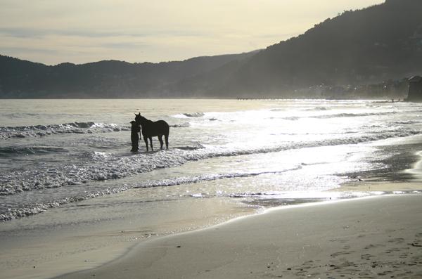 tramonto con cavallo in riva al mare